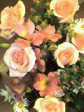 20070414_flower.jpg