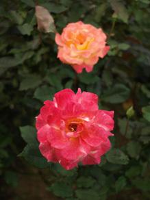 20081020-5.jpg